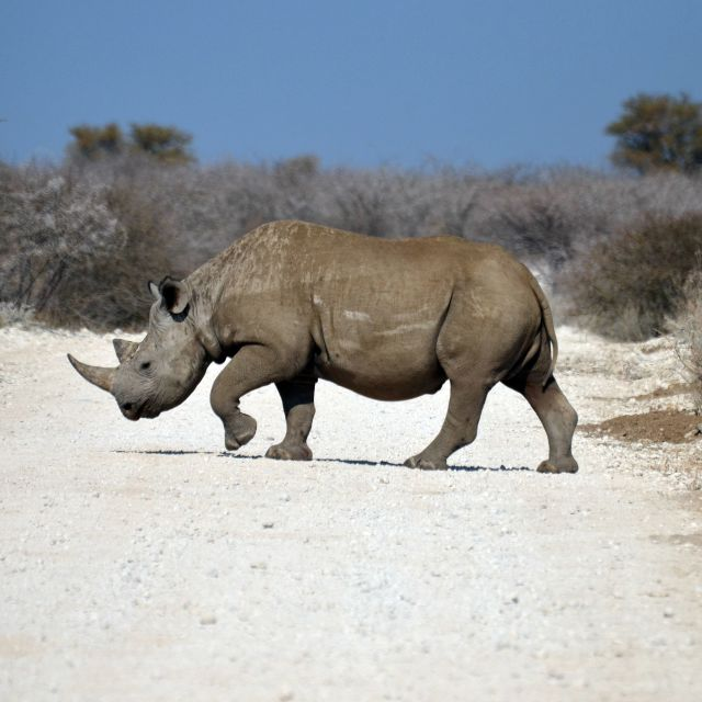 """BLACK RHINO"" stock image"