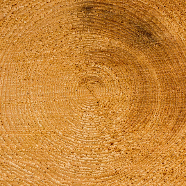 """Close up of cut of a log"" stock image"