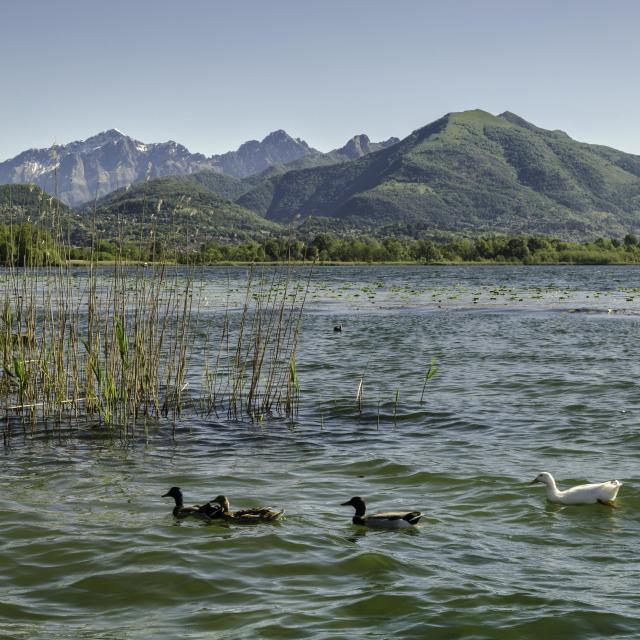 """""""Torneranno le quattro stagioni (Lake and mountain)"""" stock image"""