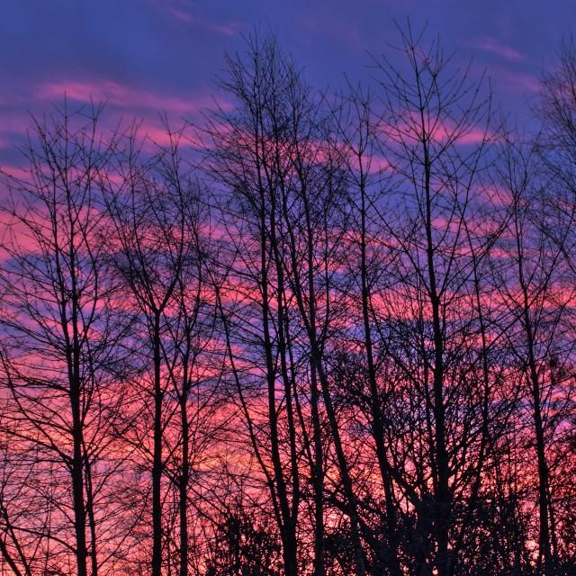 """Morning Sky"" stock image"