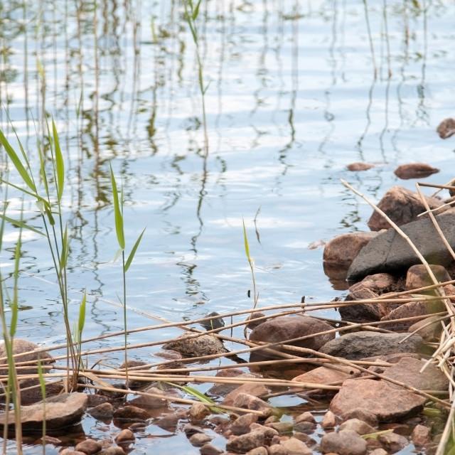 """Red granite rocks by Lake Vanern Sweden in June"" stock image"