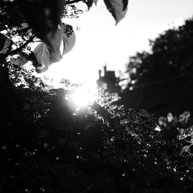 """""""Garden sun set"""" stock image"""