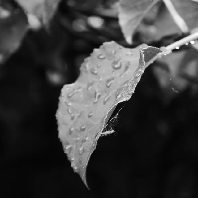 """""""Raindrops on leaf"""" stock image"""