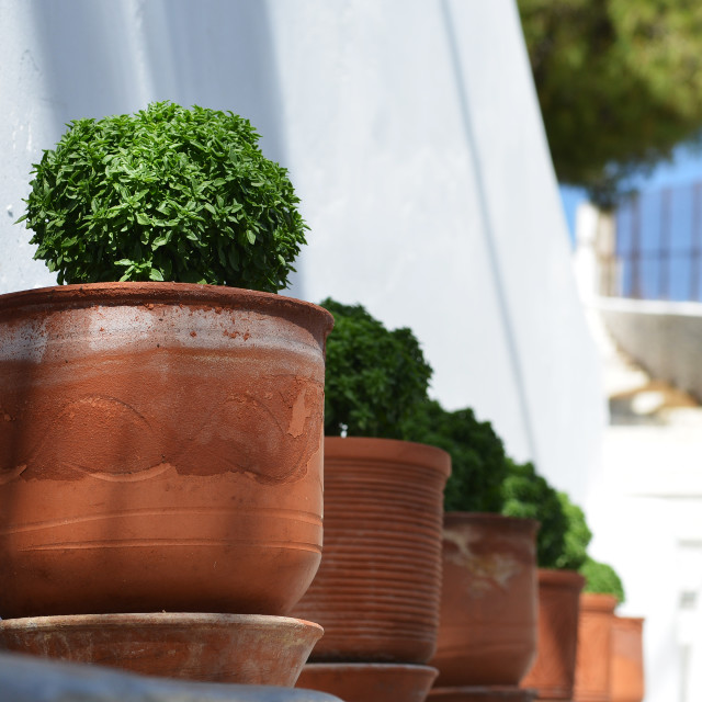 """Pot Plants"" stock image"