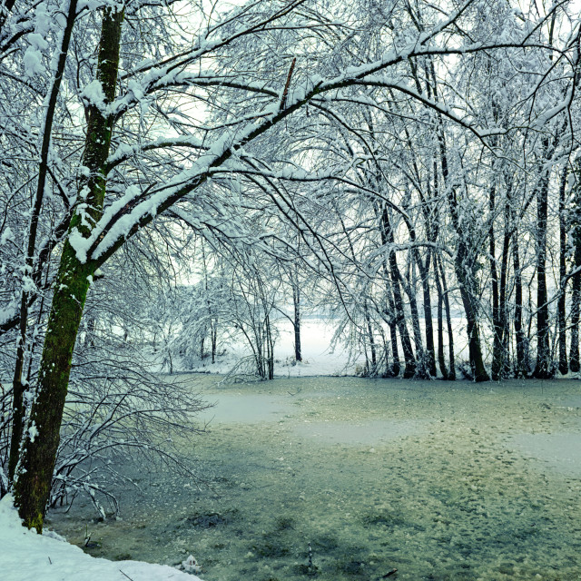 """Iced pond"" stock image"
