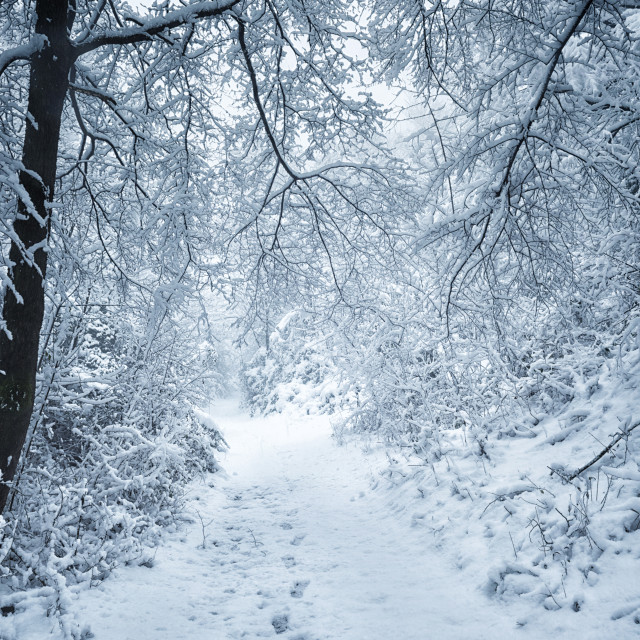 """The snowy shape in the wood"" stock image"
