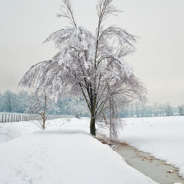 """Tree, snow and ice"" stock image"