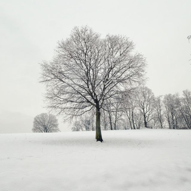 """Tree and snow"" stock image"