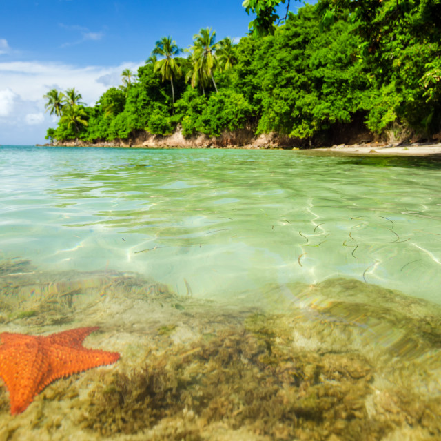 """Starfish in Clear Water"" stock image"