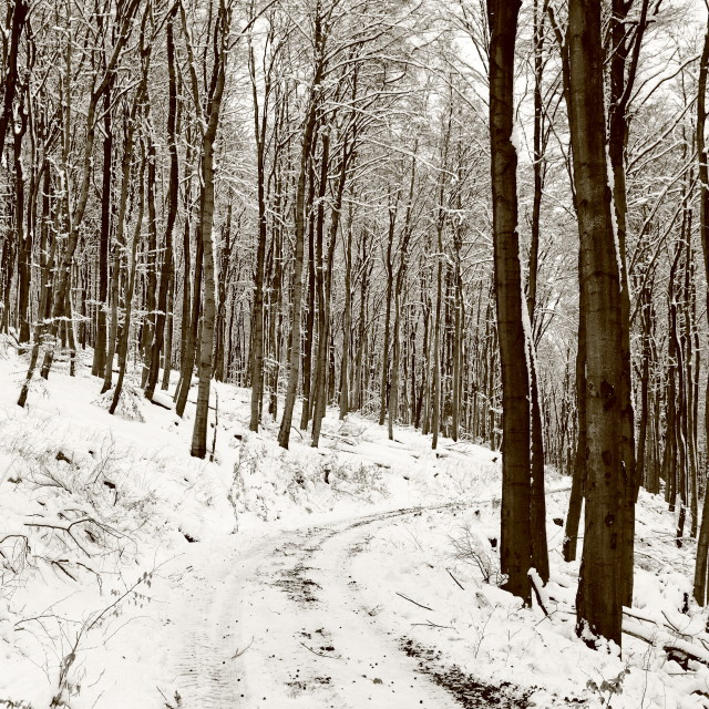 """Winter 12"" stock image"