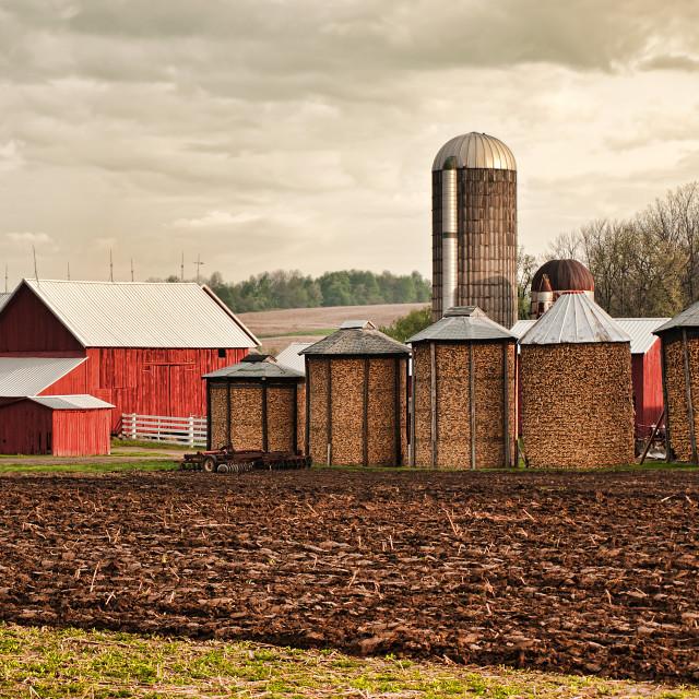 """maize farm"" stock image"