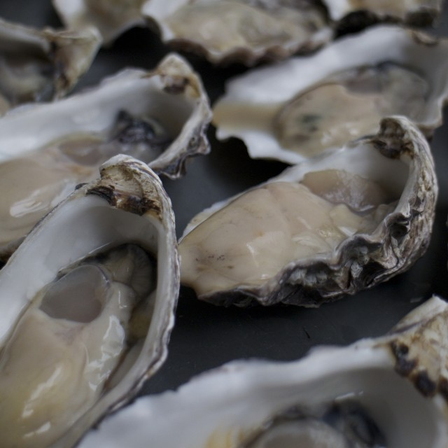 """""""Fresh Oysters"""" stock image"""