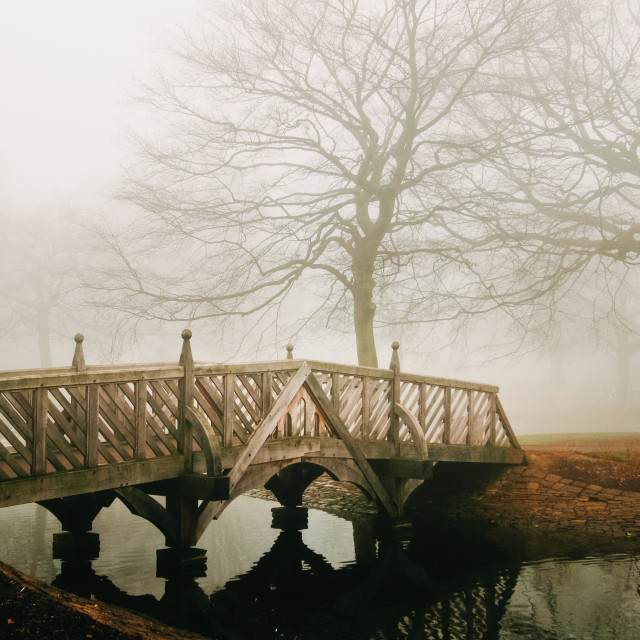 """Fog in the park"" stock image"