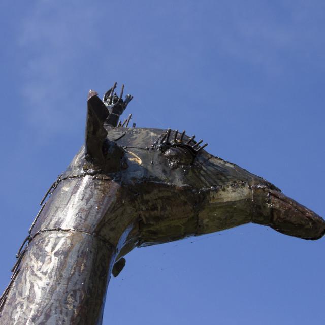 """The queen of giraffes"" stock image"