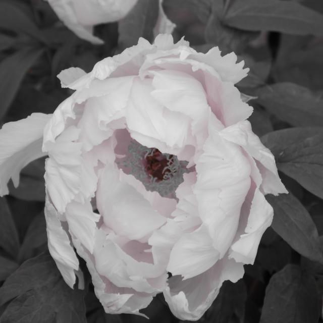 """""""Flower in garden"""" stock image"""