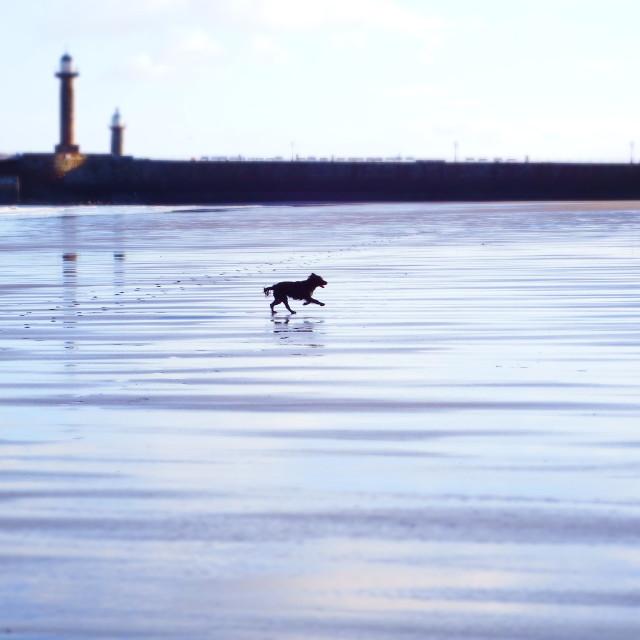 """Dog on beach"" stock image"
