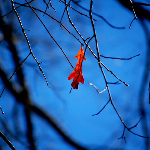 """Lone leaf"" stock image"