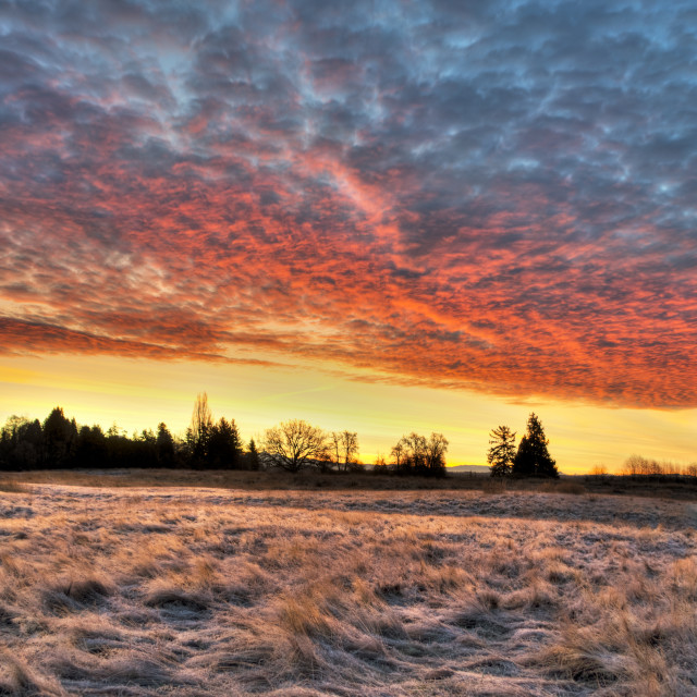 """Frost in the Meadow, Fire in the Sky"" stock image"