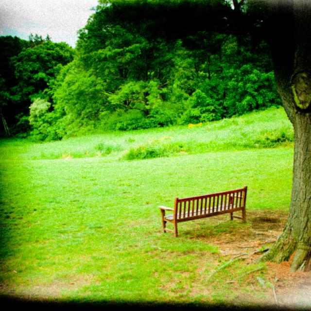 """""""Holga style bench"""" stock image"""