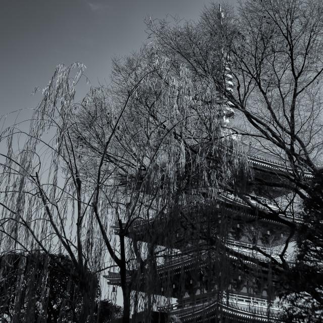 """Pagoda Obscura"" stock image"