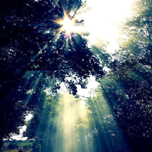 """Sun Rays Through Trees"" stock image"