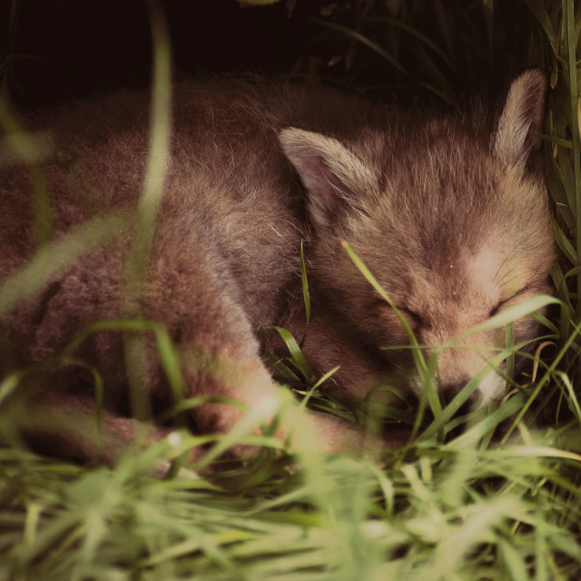 """A tiny visitor, asleep in the grass."" stock image"