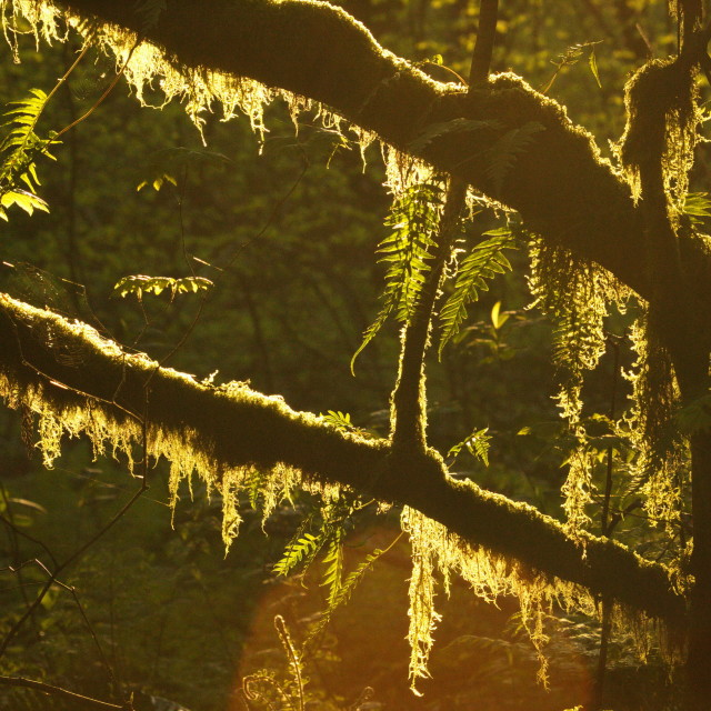 """Rainforest Sunlight"" stock image"