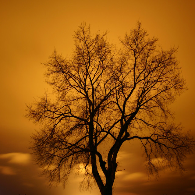 """Midnight tree"" stock image"