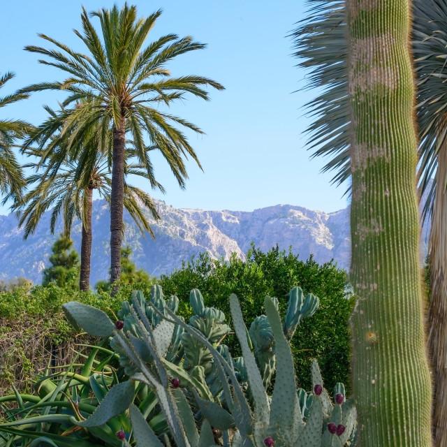 """Lush cacti garden in Soller"" stock image"