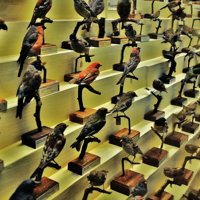 """Birds"" stock image"
