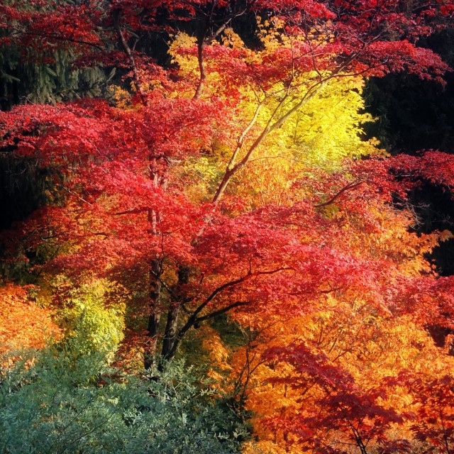"""""""Fall palette"""" stock image"""