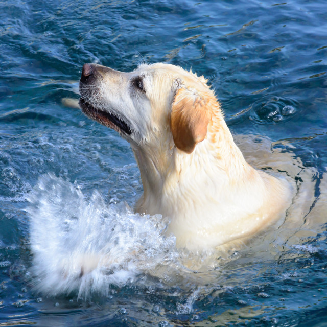 """Sea loving splashing dog"" stock image"