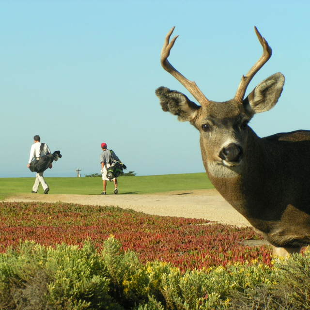 """""""Wildlife on the golf course"""" stock image"""