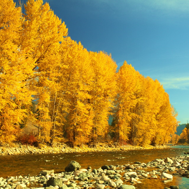 """Autumn on the Similkameen"" stock image"