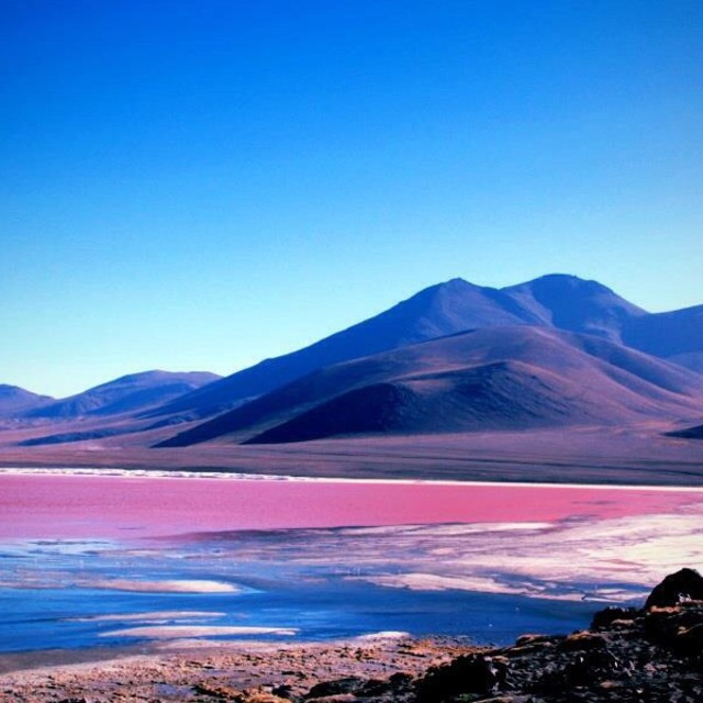 """Laguna Colorada Bolivia"" stock image"