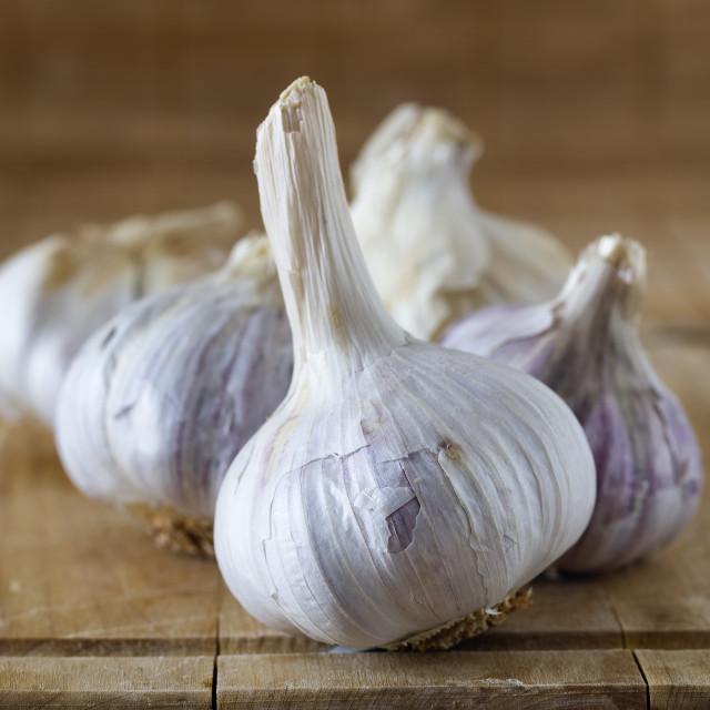 """""""Some Garlics (2)"""" stock image"""
