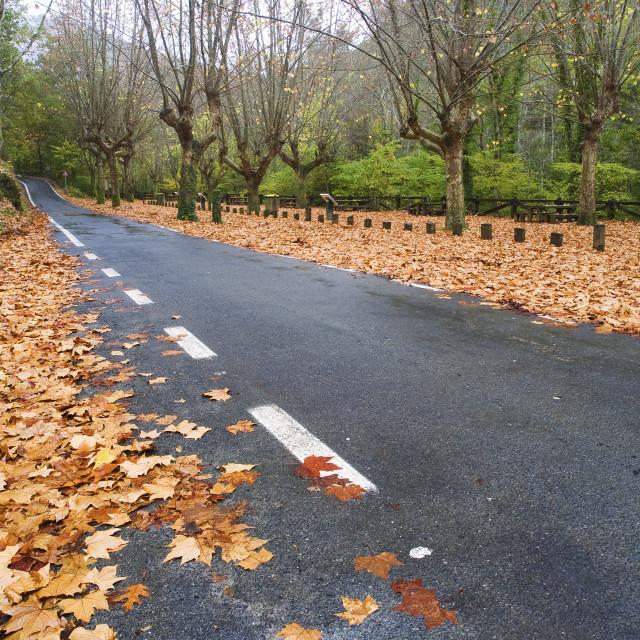"""Road in Autumn"" stock image"