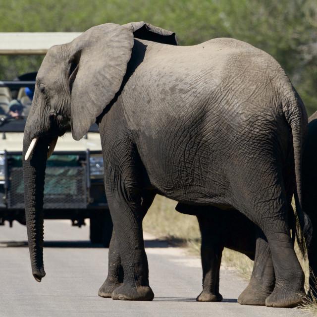 """Elephants and tourist"" stock image"