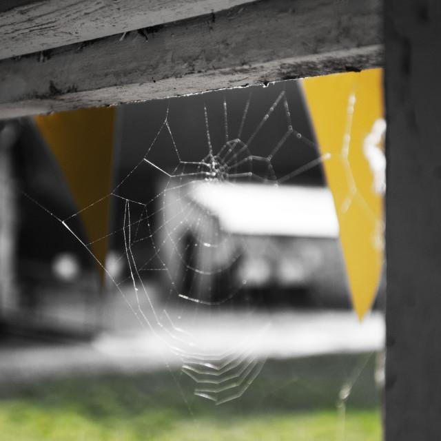 """Spiders web"" stock image"