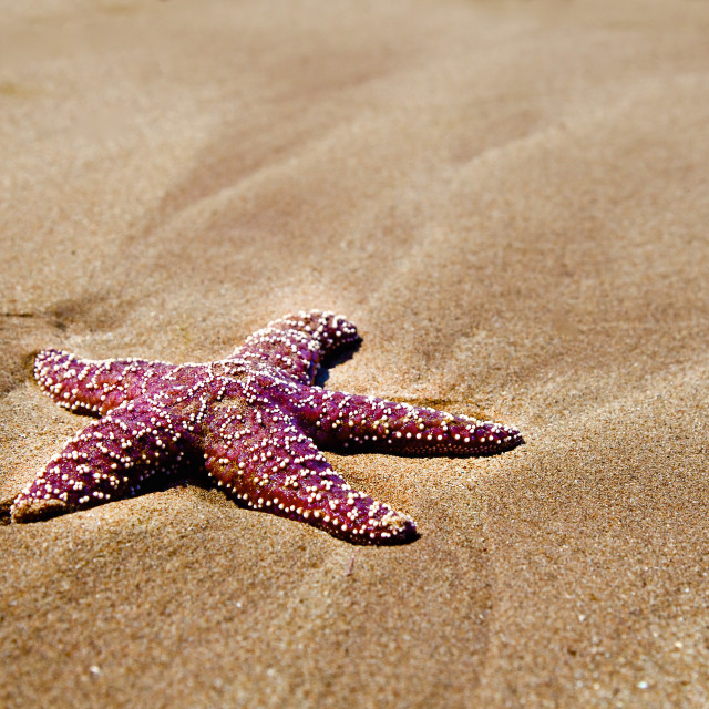"""Star Fish"" stock image"