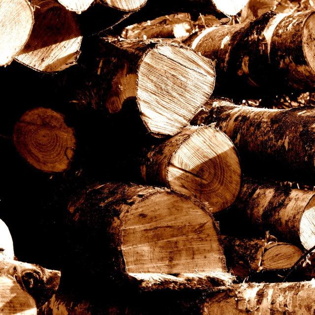 """Sepia Logs"" stock image"