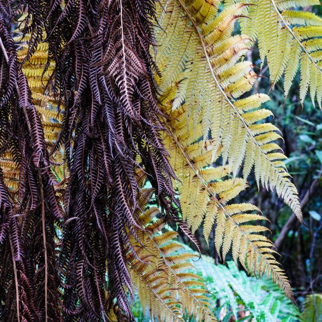 """tree fern"" stock image"