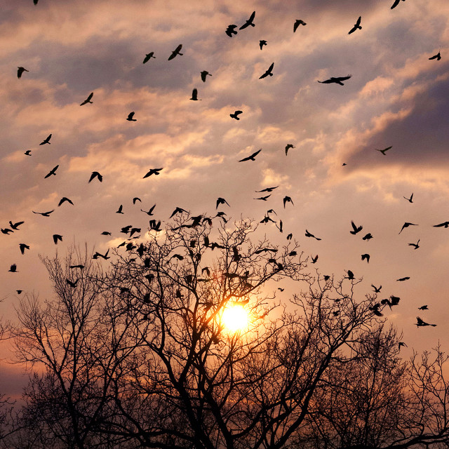 """Birds At Sunset"" stock image"