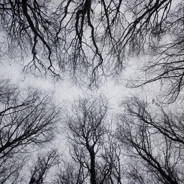 """Tree canopy"" stock image"