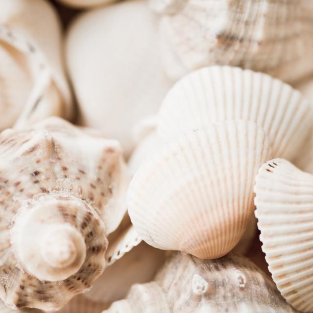 """""""Sea snails and molluscs empty shells sepia toned"""" stock image"""
