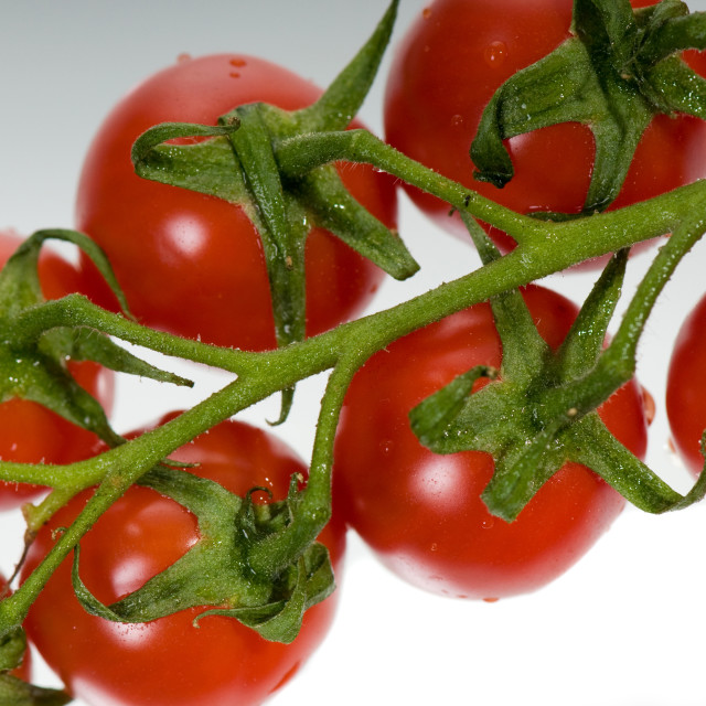 """red tomato bunch"" stock image"