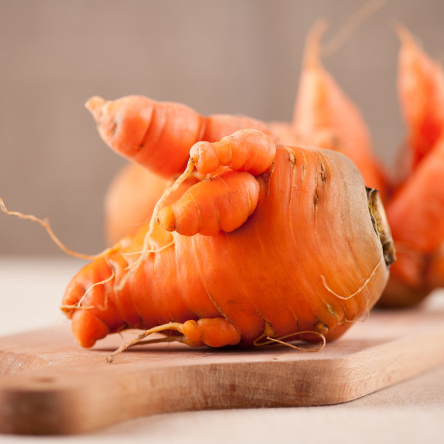 """raw deformed carrot roots"" stock image"