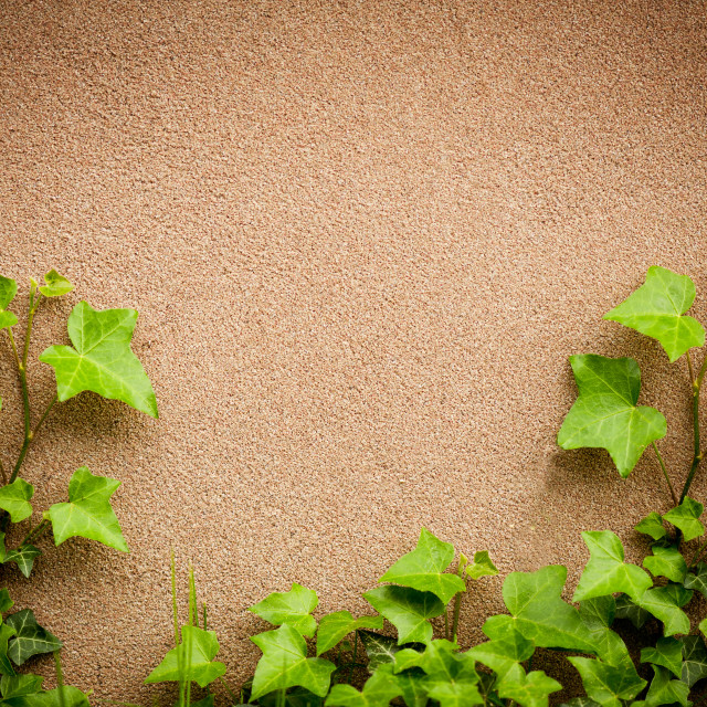 """""""leaves of hedera helix ivy and wall"""" stock image"""