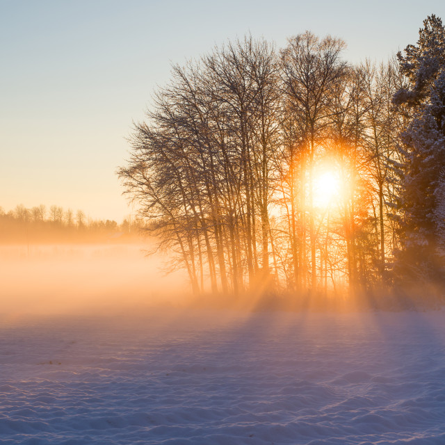 """Wintry landscape"" stock image"