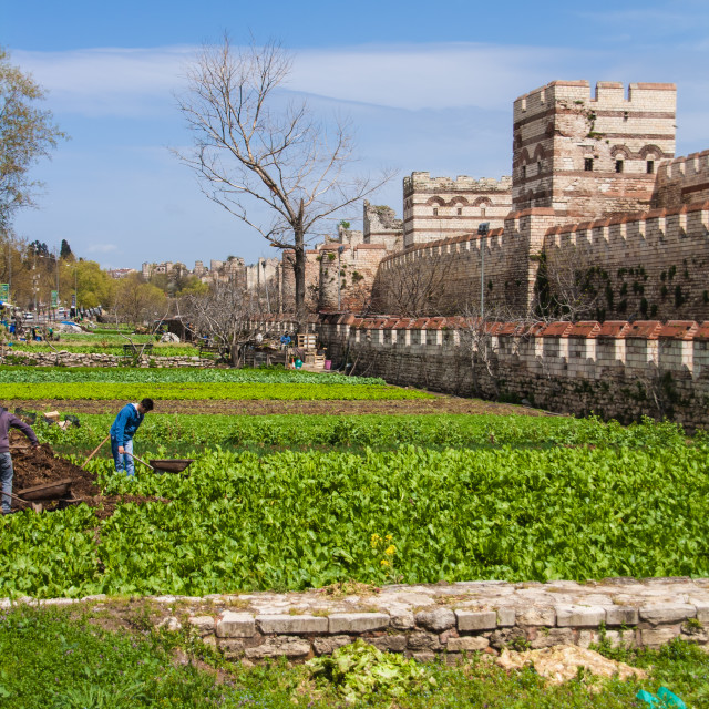 """""""Urban Gardens by the Old Walls in Istanbul"""" stock image"""
